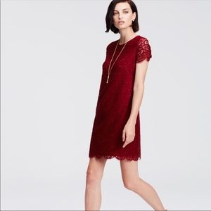 Ann Taylor Burgundy Lace Shift Dress